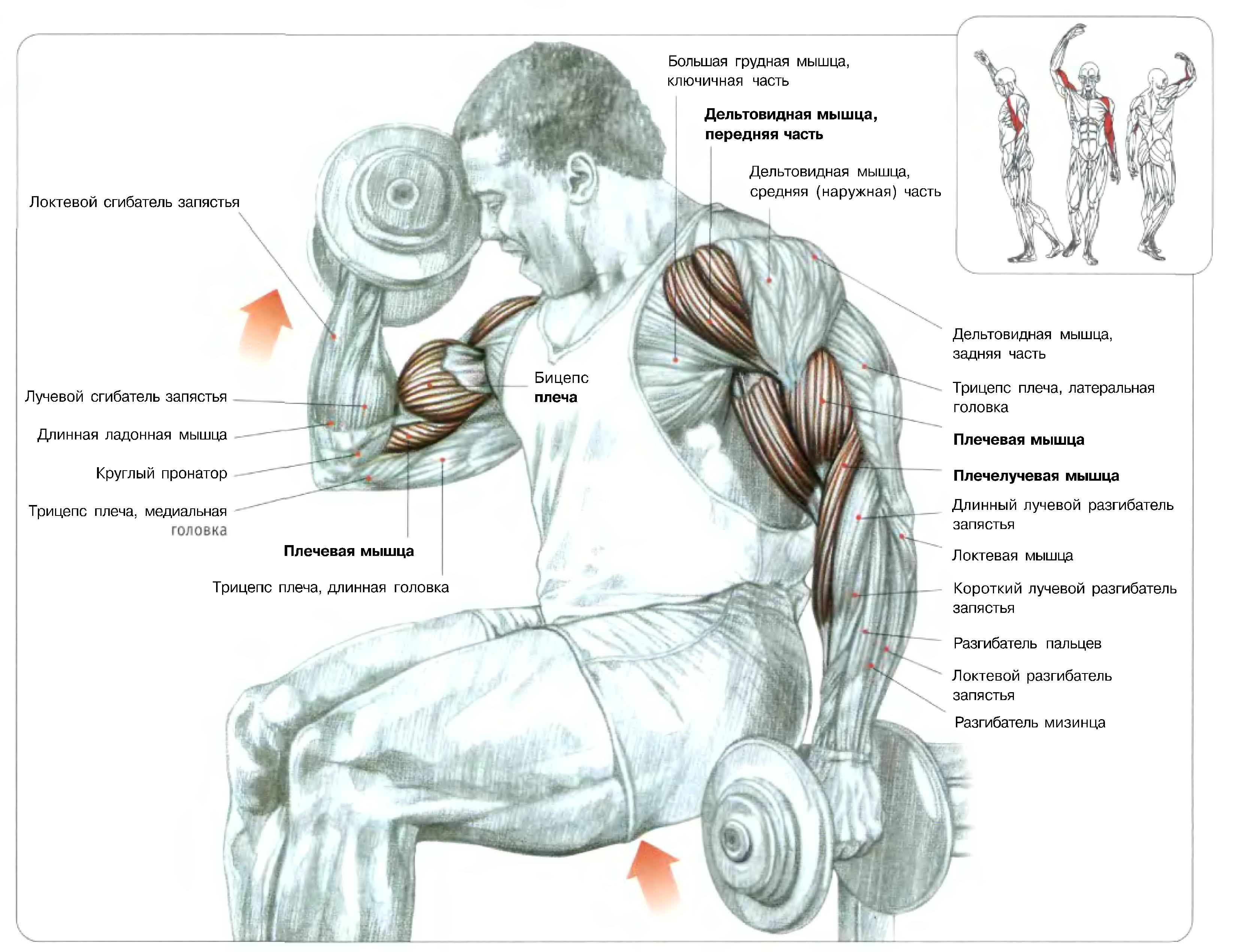 Схемы упражнений для мышц 15